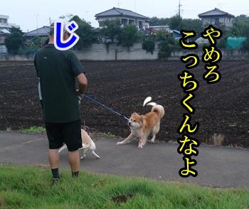 f0195543_22162746.jpg