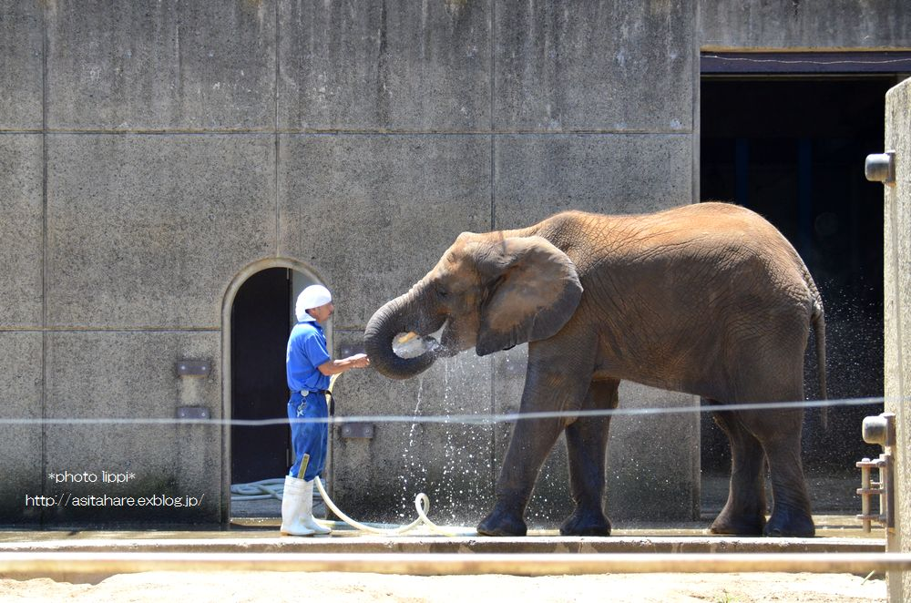 ゾウの赤ちゃんとゾウのお姉ちゃん_b0024758_2311059.jpg