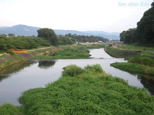 賀茂川の花 2013年7月_a0164068_21524931.jpg