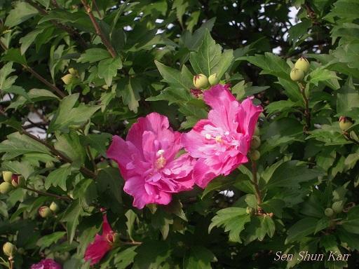 賀茂川の花 2013年7月_a0164068_220668.jpg