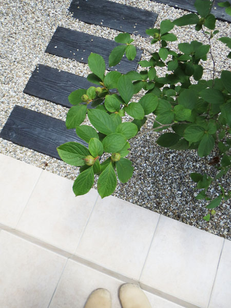 Uさま邸 完成写真を撮りに♪_f0141971_0245012.jpg