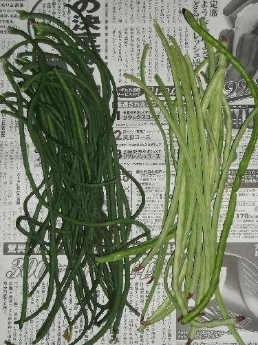 夏野菜カレーと莢食ササゲ2種 _f0018078_1983169.jpg