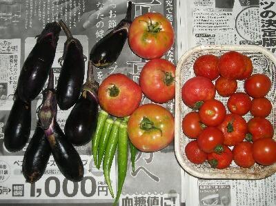 夏野菜カレーと莢食ササゲ2種 _f0018078_198827.jpg