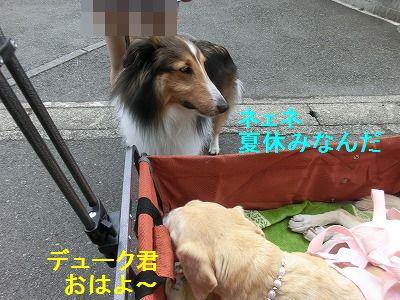 ぴぴぴっとな_e0222588_11465178.jpg