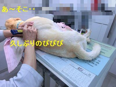 ぴぴぴっとな_e0222588_1148439.jpg