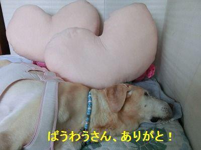 ぴぴぴっとな_e0222588_11584268.jpg