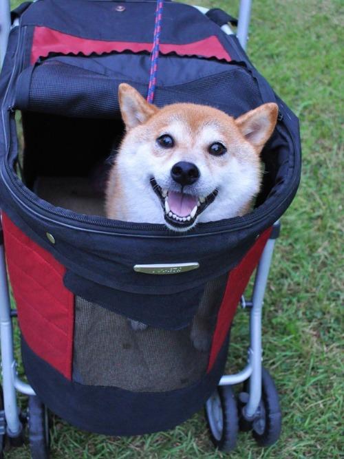 かぼちゃんは笑顔!!_a0126590_513178.jpg