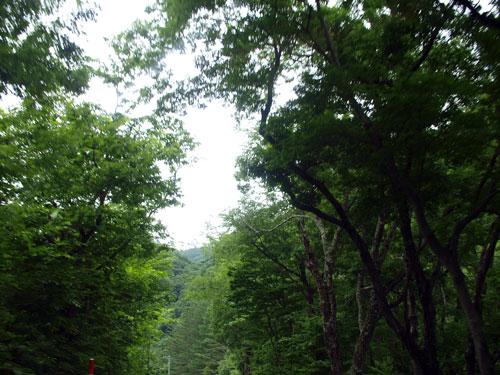 緑の家路_f0236291_5124229.jpg