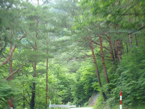 緑の家路_f0236291_5151232.jpg