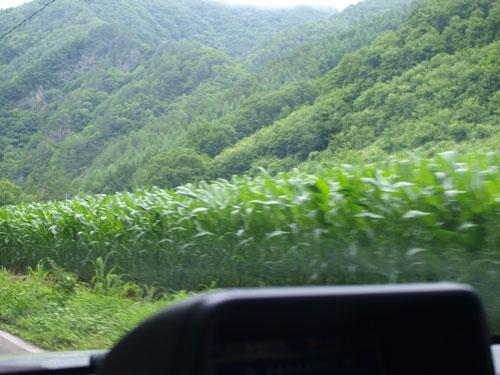 緑の家路_f0236291_51612100.jpg