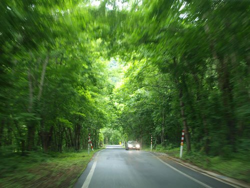 緑の家路_f0236291_519293.jpg
