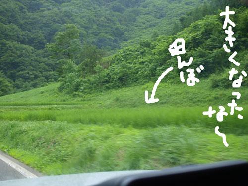 緑の家路_f0236291_5243327.jpg