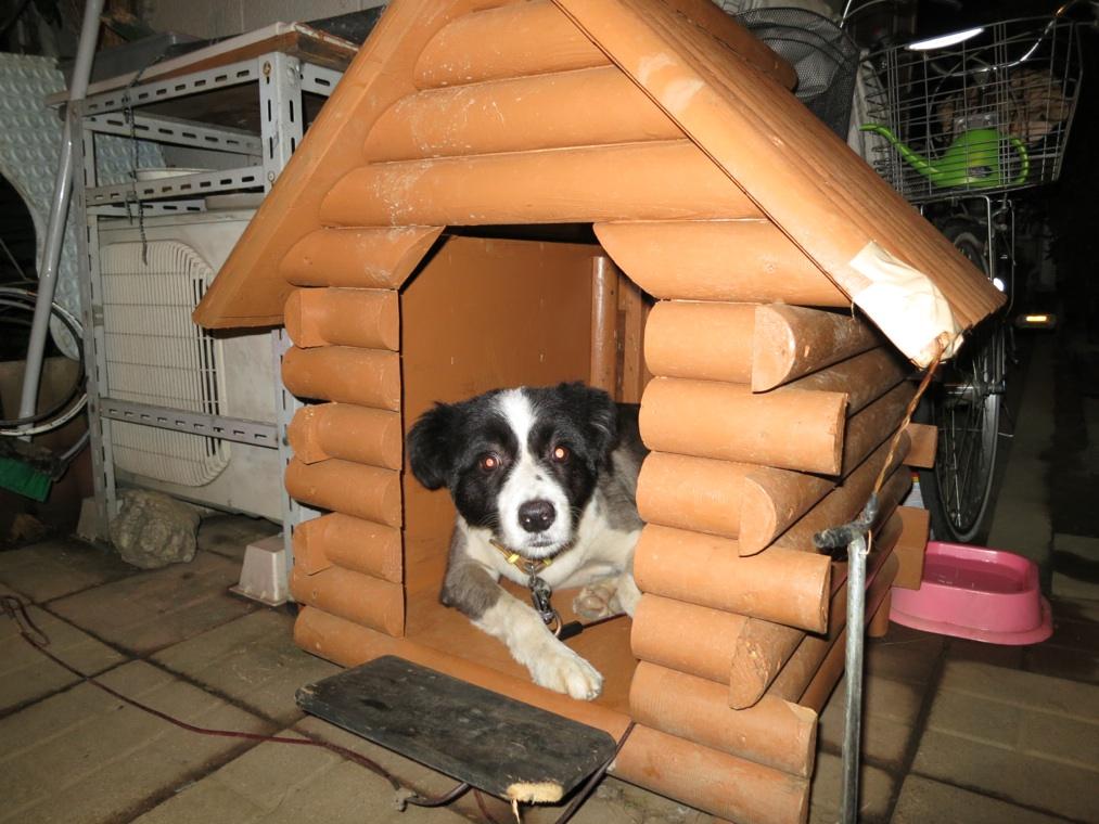 【犬】ハウス_f0141609_23163531.jpg