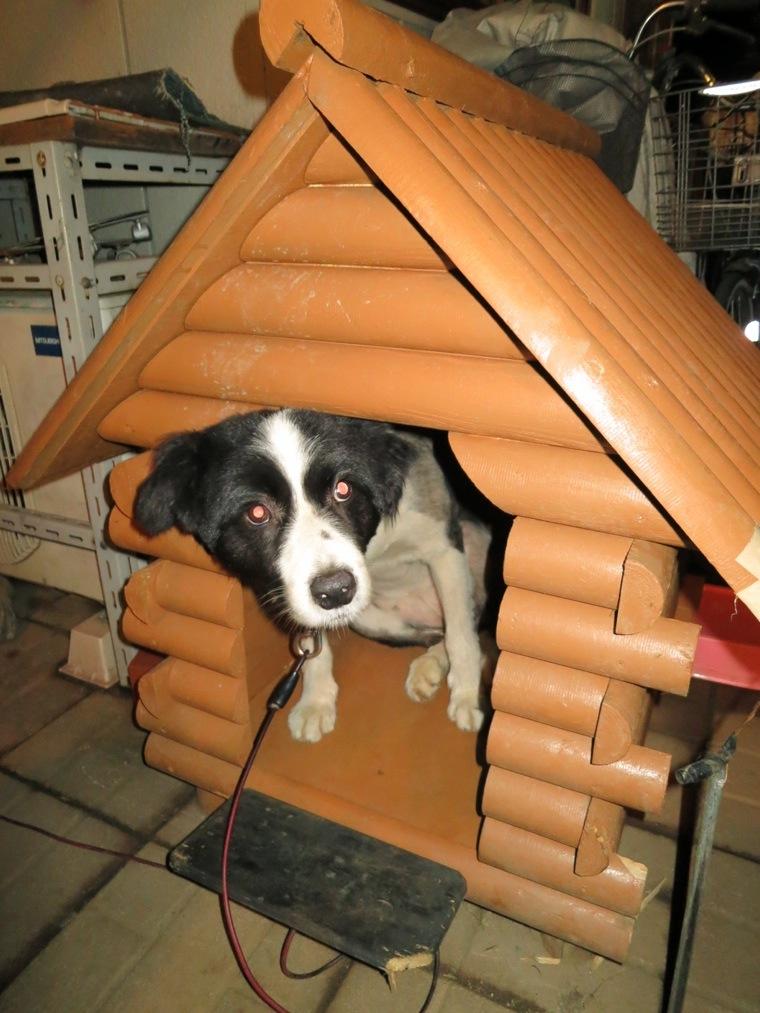 【犬】ハウス_f0141609_23163687.jpg