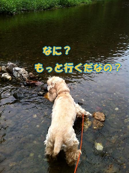 b0067012_019339.jpg