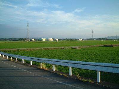 散歩 ~街路樹 夏の花~_b0228113_14421266.jpg