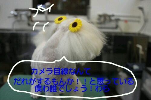 b0130018_10105774.jpg