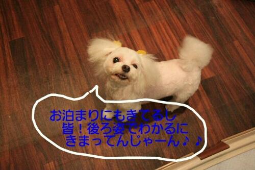 b0130018_10124890.jpg
