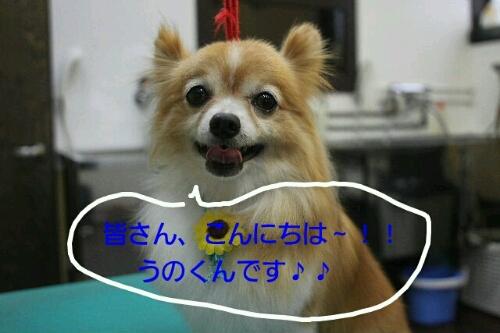 b0130018_10142410.jpg