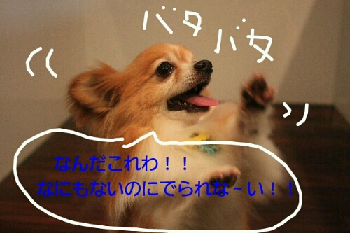 b0130018_101559100.jpg