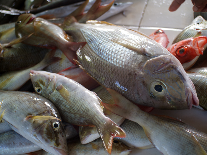 Fish at the palengke now_e0202828_14143159.jpg