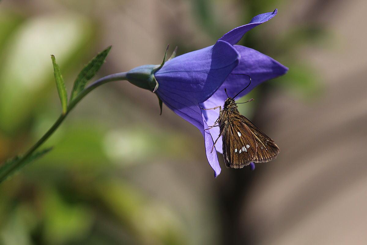 気紛れな蝶と天気_b0189231_1481474.jpg