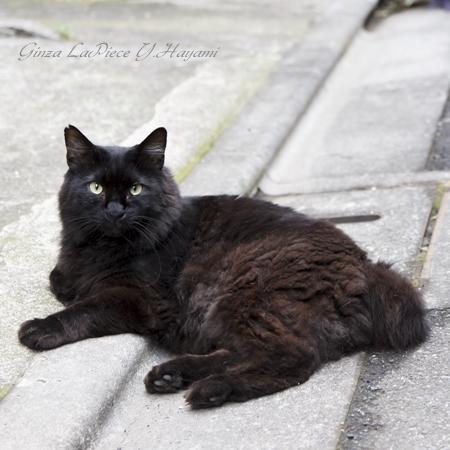 猫のいる風景 近所のクロちゃん_b0133053_014534.jpg