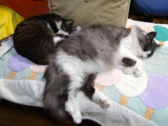 Huu&チョビ。。。ヤマセの日の寝姿はこんな感じ♪_a0136293_18355928.jpg