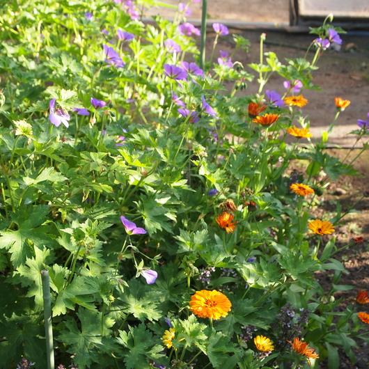 初夏のお庭②_a0292194_1421178.jpg