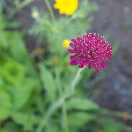 初夏のお庭②_a0292194_1485621.jpg