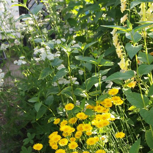 初夏のお庭②_a0292194_148683.jpg