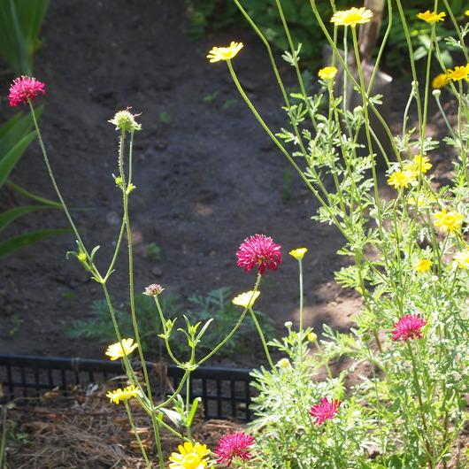 初夏のお庭②_a0292194_1494326.jpg