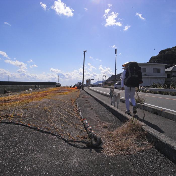 Memory of the second pilgrimage with husky HANA_c0049299_11115074.jpg