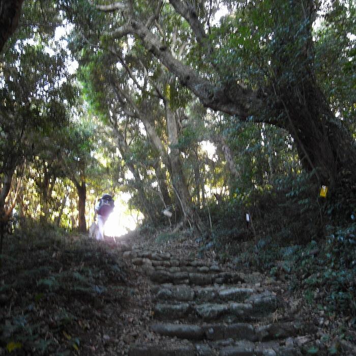 Memory of the second pilgrimage with husky HANA_c0049299_11201620.jpg