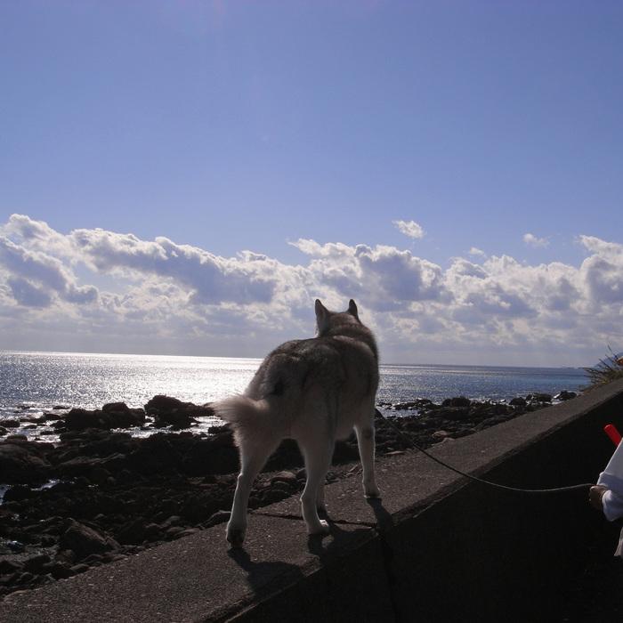 Memory of the second pilgrimage with husky HANA_c0049299_116366.jpg