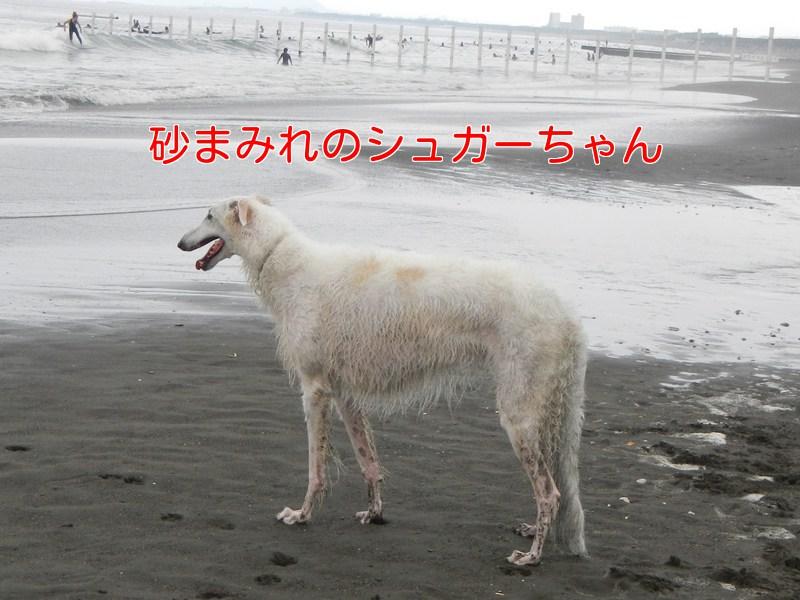 a0232619_17374616.jpg