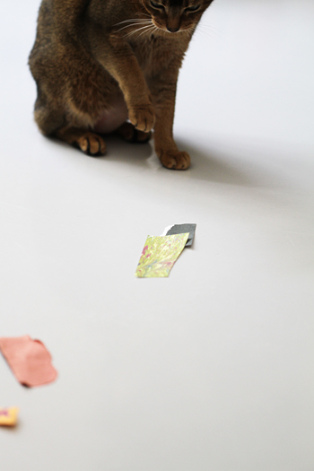 [猫的]残念ながら_e0090124_23273341.jpg