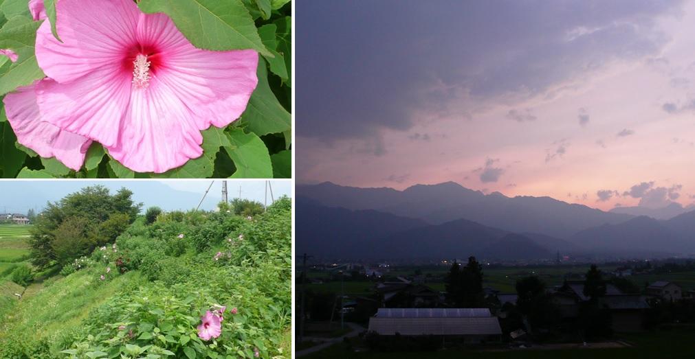 かかし村の芙蓉の花_a0212730_21431453.jpg