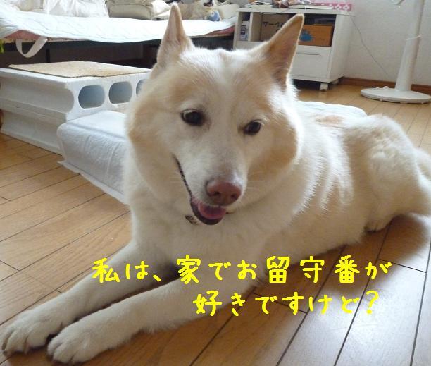 b0138430_10415070.jpg