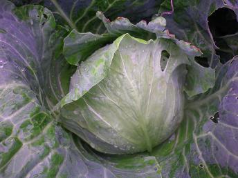 平日火曜の朝の収穫_a0139242_5546.jpg