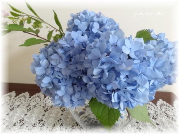 ☆青い紫陽花は・・_d0165645_191802.jpg