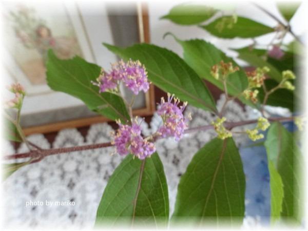 ☆青い紫陽花は・・_d0165645_19182412.jpg