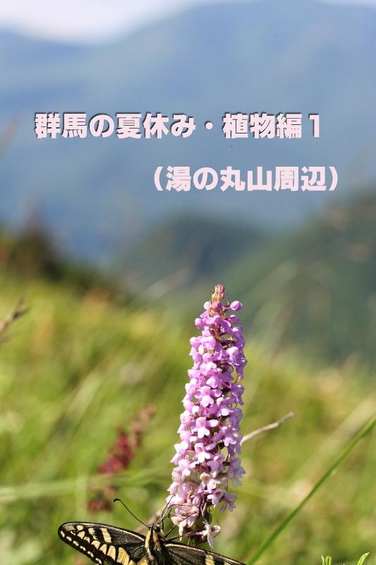 b0144049_13512759.jpg