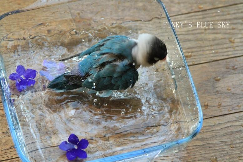 水浴(び)B.Bの記録 → 背中は語る~ (6月23日)_c0145250_9451626.jpg