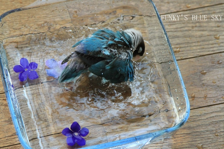 水浴(び)B.Bの記録 → 背中は語る~ (6月23日)_c0145250_945952.jpg