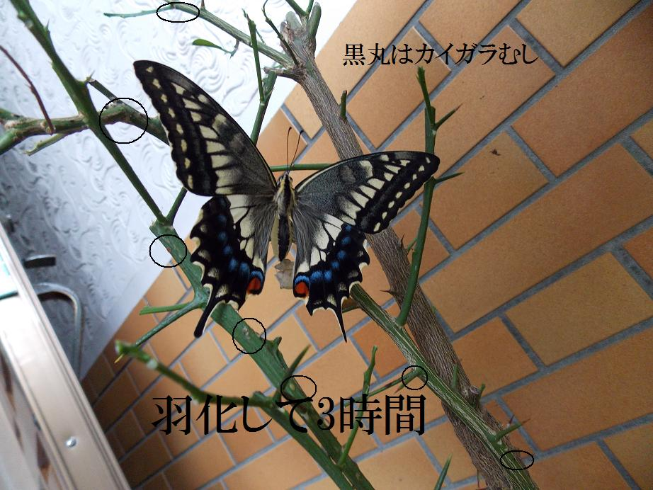 b0193252_19391348.jpg