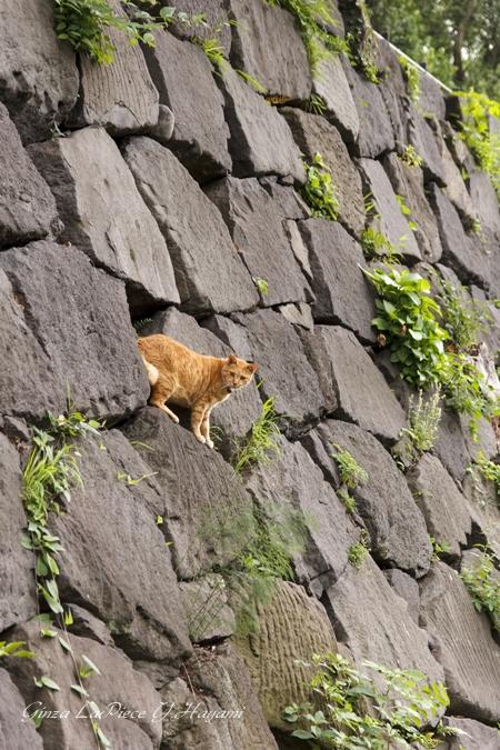 猫のいる風景 石垣の猫_b0133053_0455828.jpg