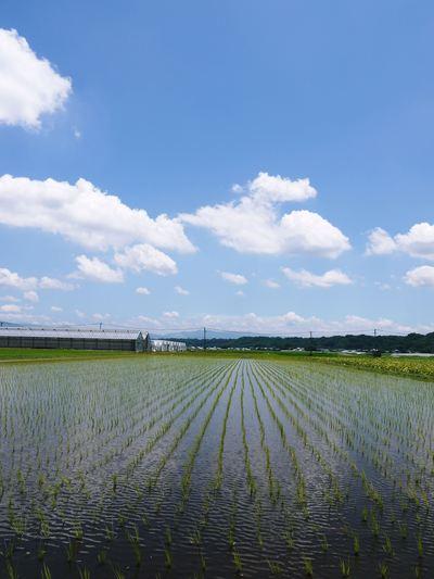 七城米 長尾農園 晴天に恵まれ、苗たちは元気に成長中です!!_a0254656_17543276.jpg