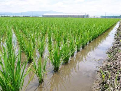 七城米 長尾農園 晴天に恵まれ、苗たちは元気に成長中です!!_a0254656_18131624.jpg