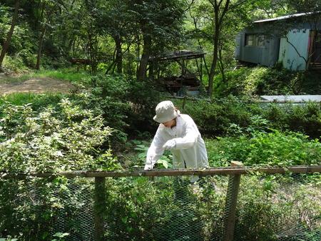 広場の草も昆虫たちのために残して刈る  in  孝子の森_c0108460_18112084.jpg